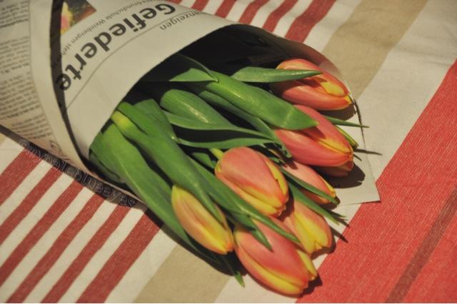 Tulpen für zu Hause