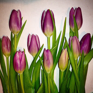 Tulpen anschneiden