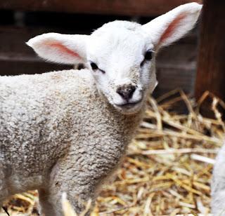 11 Fakten über Ostern