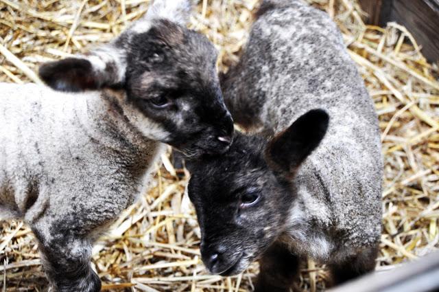 11 Fakten über das Osterfest und die Wahrheit über den Osterhasen – Teil 1
