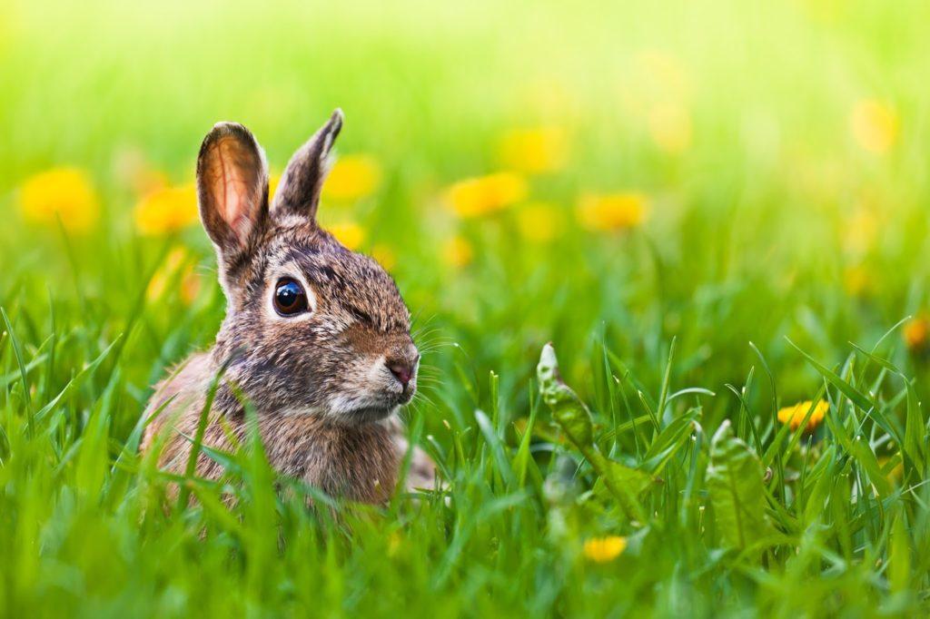 11 Fakten über das Osterfest und die Wahrheit über den Osterhasen – Teil 2